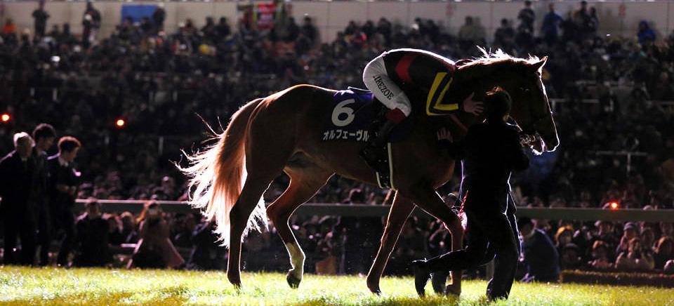 オルフェーヴル級【競馬予想キセキ】 イメージ画像