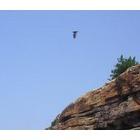 『飛び立つ』の画像