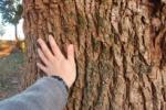 織姫ちゃんの故郷!七夕伝説の機物神社。御神木は『指定樹林』になってる!