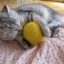 猫はかんきつ類は苦手なはずなのに・・・