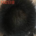 頭髪我れを待たず〜ミノタブ・フィンペシアの服用日記〜