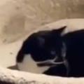 ネコがベッドに入って寝ようとしていた。犬は床で眠り始める → すると猫はこうなった…