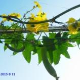 『植菜物語(2100回記念)(12)』の画像