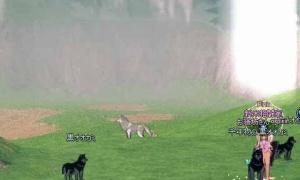 彡(^)(^)「あっちに千年物の白オオカミおるなあ」