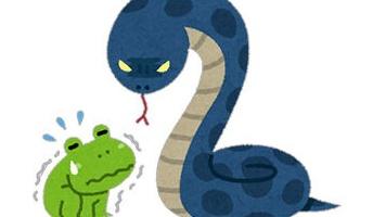 ガラガラヘビ(体長1.5m)の一年間の食事内用が予想に反して凄かった!