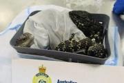【オーストラリア】スーツケースに入れたトカゲ19匹を持ちだそうとした日本人の女、メルボルンの空港で逮捕