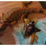 『爬虫類に癒やされてきました』の画像