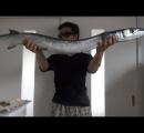こいつはとんだ凶器だぜ。尖った口と鋭い歯に要注意な魚「ダツ」