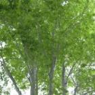 『深い森の奥』の画像