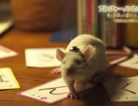 TBSドラマ「アルジャーノンに花束を」の番宣動画に謎の「は・ん・ぐ・る」の文字列が出現