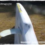 『AnguloSUP [ SURFA ] 2014』の画像