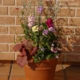 『ストックとエレモフィラの高低差を楽しむ寄せ植えを作ってみました!』の画像