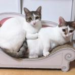 くーまと猫との日々