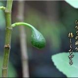 『種苗法と種子法について』の画像