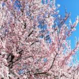 『イタリアでは、おはぎではなく揚げシュークリームで春を感じる!』の画像