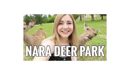 奈良公園の鹿が美女に殺到、奇跡のサムネイルに海外ユーザー大満足