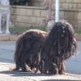 Hope For Paws~さあこれでサッパリしたよ!放浪中の2年間毛が伸び放題だった犬