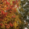 【マリメッコ】簡単に部屋に取り入れる秋の気配!