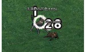 犬 VS 千年物の灰色オオカミ