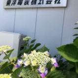 『アジサイ咲き始めたよ』の画像