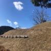 明日香村再訪記① 丘の上に立つ古墳時代終末期の『マルコ山古墳』