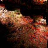 『日本の心:「わび」と「さび」』の画像
