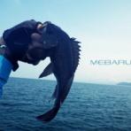 お魚SEASONS