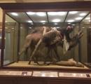 博物館に展示されていたマネキン。実は人が埋められていたことが判明し、大騒ぎにwwwww