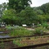 『9月の都立薬用植物園Ⅱ;小平市』の画像
