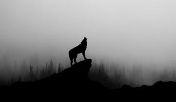 """世界中で研究""""オオカミに育てられた子""""の実記は嘘だった…"""
