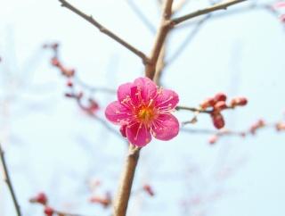 お婆さん「もしもし梅子です」俺「あの、間違い電話ですよ?」お婆さん「今日は梅の花が綺麗に咲いたんですよ^^」俺「あのー...」→ まさかの展開に…