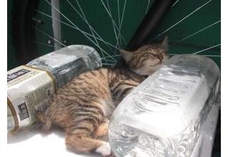 【愛知】猫よけ用ペットボトルで出火か、太陽光が集中 名古屋