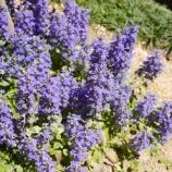『庭の雑草対策! 常緑でお花もかわいいグランドカバー!』の画像