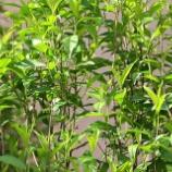 『美しい新緑:花謝樹無影』の画像