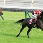 『【目黒記念結果】8番人気ウインキートスが快勝 33年ぶりの牝馬V』の画像
