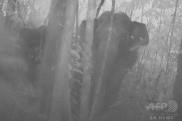 22世紀までゾウが生き残るのは厳しい状態 ・・・密漁や森林開発はどうにかならないのか