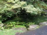 『亀山公園の池を巡る』の画像