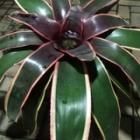 『珍しい植物たち  Part1  (小戸)』の画像