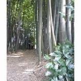 『竹寺へ』の画像