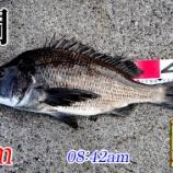 『強風の中、価値ある?1匹!周防大島の黒鯛釣り #022』の画像