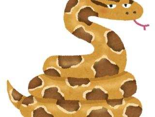 3.5mのニシキヘビに勝てる野生動物