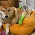 子猫用のホットドッグを買おうと思ったある「事件」
