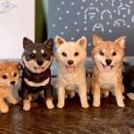 木彫り彫刻家「はしもとみお」の「犬の彫刻」がフィギュアになってガチャに登場!
