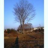 『朝の影』の画像