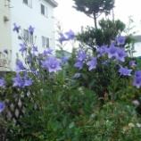 『桔梗町のシンボル 花』の画像