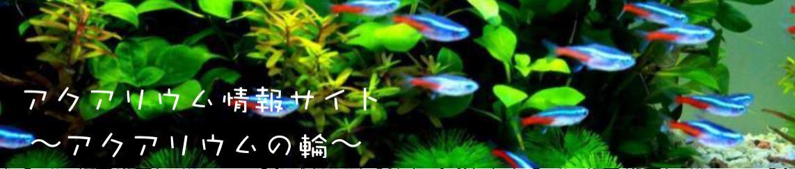 アクアリウム情報サイト〜アクアリウの輪〜 イメージ画像
