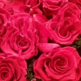 『百万本の薔薇を』の画像