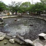 『続、池掃除』の画像