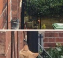【画像】隣に住んでいるネコがブチ切れた様子でにらみつけてくると話題に