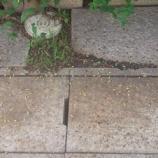 『毛虫退治』の画像